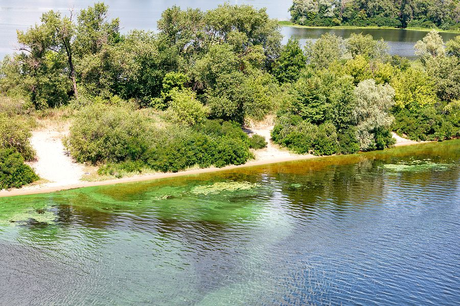 Blue-Green Algae is DANGER to Your Dog